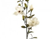 PLS01-Pr. of Cream Magnolia Stems