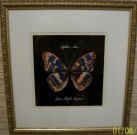 A08-Butterfly Print,   1 of 2, Gold Frame