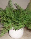 PL07-Plant, Fern in concrete pot