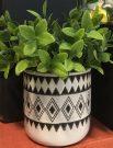 PL10-Leafy green plant, aztec pot