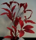 PLS13-Red Leaves, Single Stem