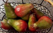 Kitchen, Pkg of Faux Pears-Acc028