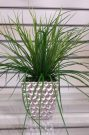 PL32-Grass in Silver Dimpled Pot