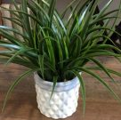 PL33-Green Grass in Grey & White Ceramic Pot