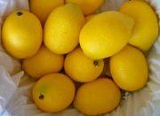 Kitchen, Pkg of Lemons-Acc73