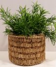 PL42-Cork Planter with fern sprigs