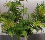 PLS19-Fern Stems, Bundle of 4