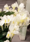 PLS20-Pr. of white silk flower stems