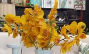 PLS21-Amber Stems, Orchids & Cattail