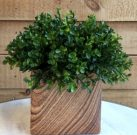PL12-Boxwood Plant, Faux Wood Vase