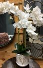 PL30a-Orchid in Cream Antique Pot