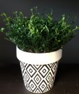PL44-Green Grass in B&W Geometric Pot