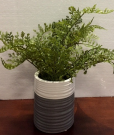 PL07a-Fern in Grey & White Ribbed Pot