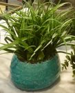 PL18a-Green Grass in Turquoise Pot