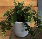 PL08b-Weeping Ivy, concrete or black pot