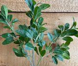 PLS14-Green Leafy Stems, Set of 3