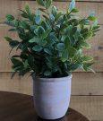 PL12d-Green Grass, Terracotta Pot