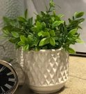 PL10a-Greens in Diamond Textured Pot