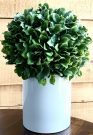 PL51a-Lrg Boxwood Topiary, White Pot