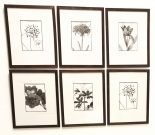 A109d-Series 6, Botanical Sketches