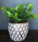 PL44b-Greens in gold honeycomb pot