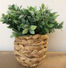 PL51b-Leafy Boxwood, Woven Pot, Med