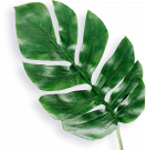 PLS18a-Set of 3, Tropical Palm Leaf