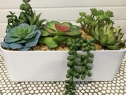 PL55a-Outdoor Planter, Succulents