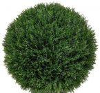 PL54e-Cedar Topiary Ball, Lrg