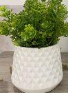PL10aa-Greens in Diamond Textured Pot